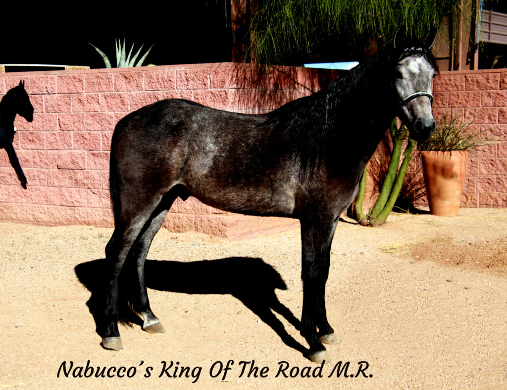 Nabucco´s King Of The Road M.R._27 copy