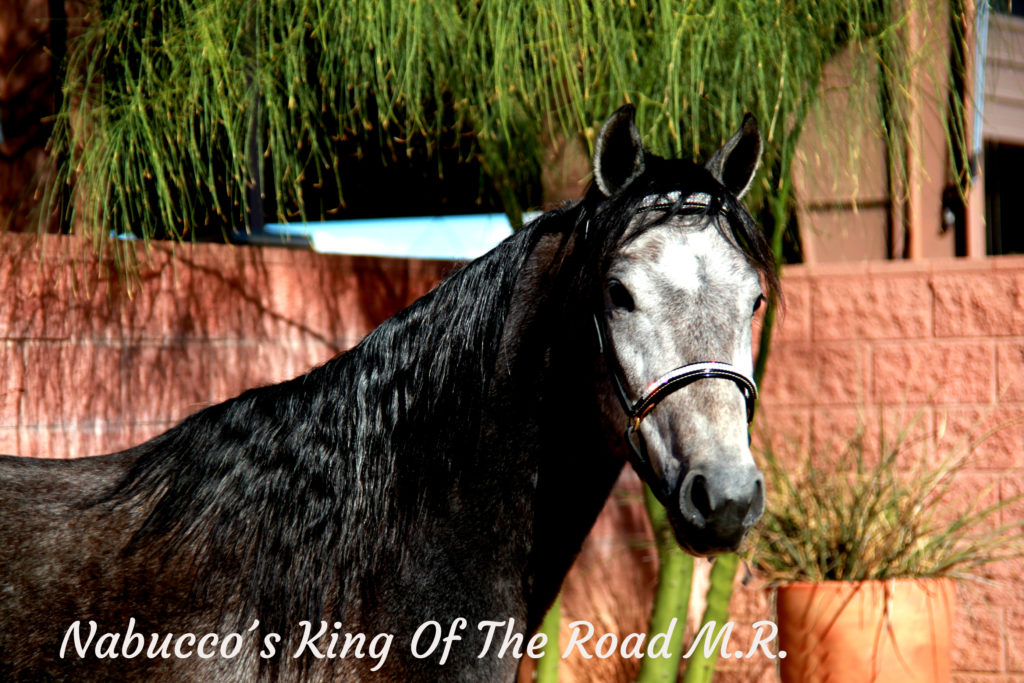 Nabucco´s King Of The Road M.R._31 copy