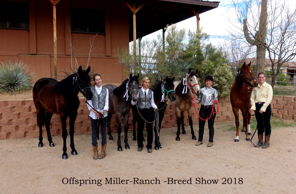 Offspring MR 2018 breed-show